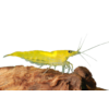 Kép 1/3 - Neon Yellow garnéla