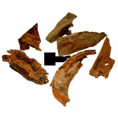 Mangrowe fagyökér